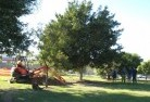 Aramara Tree lopping 15